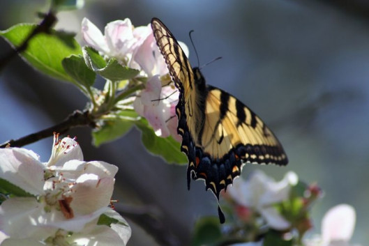 motyl fot. PALMER W. COOK Freeimages