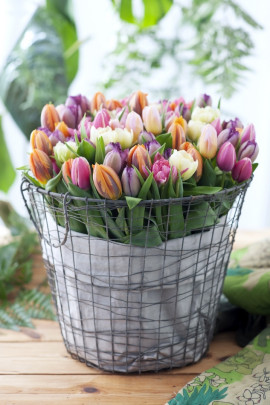tulipany w doniczce fot. Flower Council Holland